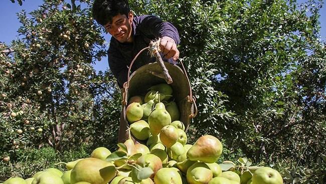 ارزآوری بخش کشاورزی و غذا به 5.8 میلیارد دلار رسید