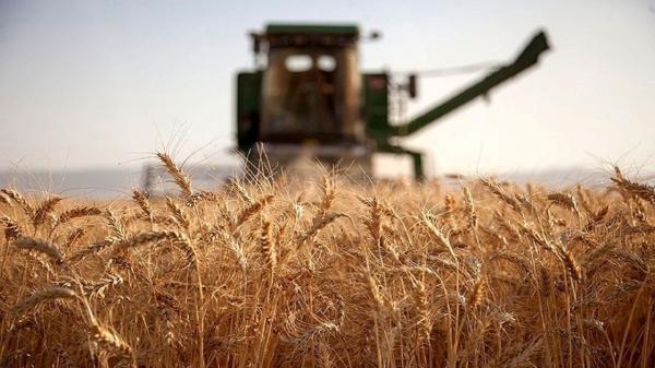 بذر گندم مورد احتیاج در لرستان ذخیره شد